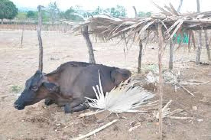 Más del 30% trabaja en agricultura, pesca y ganadería en ocho provincias, actividades afectadas por lluvias